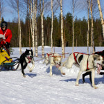 A musher and his dogs racing